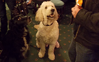 The Walnut Tree - Maidstone - Dog friendly